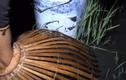 Video: Ra đồng sau cơn mưa lớn, hai người đàn ông thu hoạch đầy ắp xô