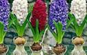 4 cây phong thủy trồng không cần nước, càng xanh tươi gia chủ càng giàu