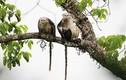 """2 loài động vật Việt Nam vào danh sách """"xấu nhất thế giới"""""""