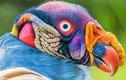 """10 loài chim giống """"người ngoài hành tinh"""" hơn động vật"""