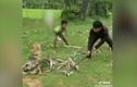 Video: 3 đứa trẻ chiến đấu với trăn quái vật để cứu chó cưng