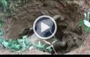 Video: Hành động bất ngờ của voi mẹ khi voi con bị mắc kẹt được giải cứu