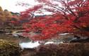 8 điểm ngắm mùa thu đẹp nhất xứ Phù tang