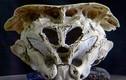 Bí ẩn hộp sọ có hình dáng độc nhất vô nhị ở Bulgaria