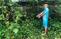Tên trộm 350 cây vàng ở Sơn Tây bị bại lộ như thế nào?