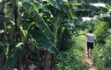 Bắt giữ nghi phạm hiếp dâm bé gái 12 tuổi trong vườn chuối