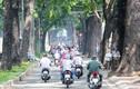 """""""Biểu tượng rừng xanh"""" giữa Sài Gòn sắp bị khai tử"""