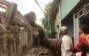 Hàng chục tấn gỗ lao xuống cầu, đè sập nhà dân
