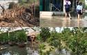 Ảnh: Nông dân Sài Gòn bất ngờ mất tiền tỷ vì vỡ đê bao