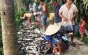 Hàng tấn cá chết bất thường, dân bất chấp nguy hiểm mua ủng hộ