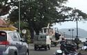 Người dân Côn Đảo chằng níu nhà cửa phòng chống bão số 16