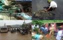 10 sự kiện nóng hầm hập dư luận VN trong tuần (70)