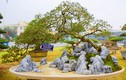 Kịch độc bonsai ổi tàu nghìn trái 500 triệu không bán