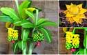 Ngắm bonsai chuối cảnh siêu độc trên thị trường Tết 2018