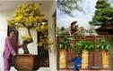Ngắm loạt cây bonsai vô giá của danh hài Hoài Linh