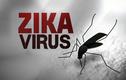 Những điều cần biết về loài muỗi truyền virus Zika