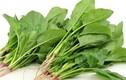 """Những loại rau là """"thần dược"""" cho người bị đau dạ dày"""