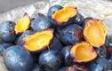 Thèm thuồng loạt món ngon từ quả cọ, đặc sản Phú Thọ