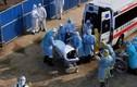 Dịch corona ngày 7/2: Người chết tiếp tục tăng, VN có 12 người nhiễm