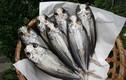 Món cá thối kinh dị của Nhật Bản được ví như đậu phụ thối