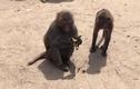 Hãi hùng cảnh khỉ đầu chó săn giết vịt đổi bữa