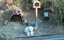 Chó chờ chủ gần 2 năm ở nơi anh gặp nạn qua đời