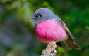 """""""Giải mã"""" loài chim cực thời trang, ngỡ không tồn tại"""