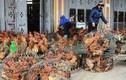 150 ngàn tấn thịt gà ngoại giá 21 ngàn/kg, nhập thoải mái không lo gì?
