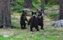 Chạy bộ trong rừng, vô tình chụp được khoảnh khắc kỳ lạ của 3 con gấu