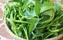 Giải oan cho rau muống, loại rau bị coi là siêu tích trữ chất độc