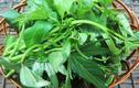 Loại rau cho heo ăn, giá trị dinh dưỡng khiến nhiều người sửng sốt