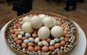 Trứng gà, vịt, cút, ngỗng, loại nào bổ nhất?