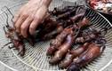 Thịt chuột La Chí, đặc sản Hà Giang nhiều người nhìn cũng run sợ