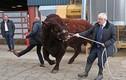 Thủ tướng Anh dắt bò, bản đồ bão 'chế' của TT Trump vào top ảnh tuần