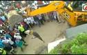 Cá sấu khổng lồ bò lên cao tốc dọa tài xế hoảng sợ