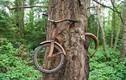 """Sự thật hãi hùng """"cây ma"""" ăn xe đạp dị nhất hành tinh"""