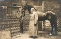 Chuyện lạ về con ngựa nổi tiếng lịch sử biết... làm toán