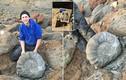 Phát hiện vỏ hóa thạch 115 triệu tuổi, nặng gần 100 kg