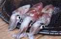 Thấy hải sản có đặc điểm này tuyệt đối không được mua