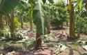 Bản án nào cho kẻ hiếp dâm bé gái 12 tuổi trong vườn chuối ở Hà Nội?