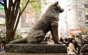 Chuyện cảm động về chú chó trung thành nổi tiếng Nhật Bản