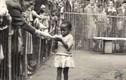 """Hãi hùng con người trở thành """"thú cưng"""" trong vườn thú hơn 400 năm trước"""