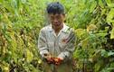 Hà Nội: Vựa rau Mê Linh giờ ra sao sau vụ giải cứu nông sản?