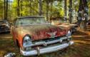 """Ghé thăm """"vương quốc"""" xe cổ bị lãng quên trong rừng"""
