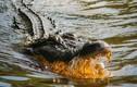 Hãi hùng hòn đảo có đàn cá sấu hung dữ đoạt mạng hàng trăm người