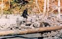 Đoạn video về sinh vật lạ nghi là quái vật bí ẩn Bigfoot
