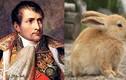 """Bách chiến bách thắng, vì sao Napoleon """"thảm bại"""" trước một đàn thỏ?"""