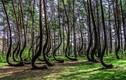 Bí mật giấu kín trong những khu rừng kỳ quái nhất hành tinh