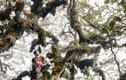 """Sự thật """"lạnh người"""" hiển hiện trên đỉnh núi cao thứ 5 Việt Nam"""