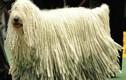 Top 8 loài động vật sở hữu bộ lông kỳ lạ nhất thế giới